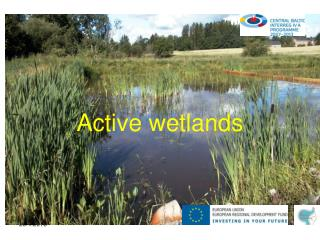 Active wetlands