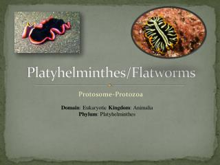 Platyhelminthes/Flatworms