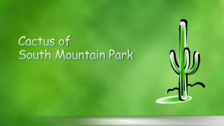 Cactus of  South Mountain Park