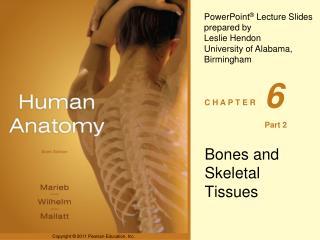 Bones and Skeletal Tissues