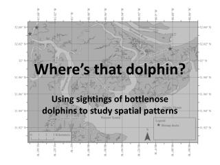 Where�s that dolphin?