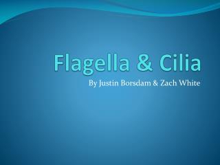 Flagella & Cilia