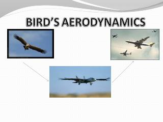 BIRD'S AERODYNAMICS