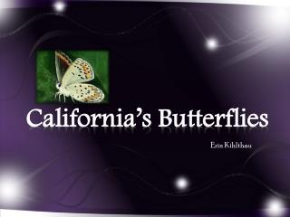 California's Butterflies