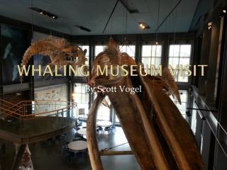 Whaling Museum Visit