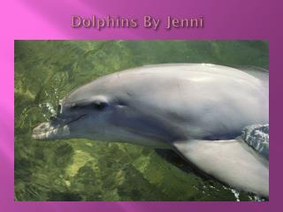 Dolphins By  Jenni