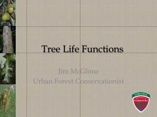 Tree Life Functions