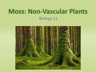 Moss: Non-Vascular Plants