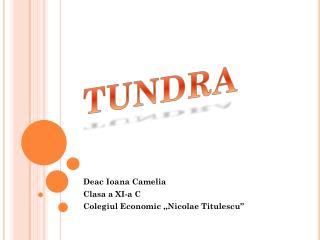 "Deac Ioana Camelia  Clasa a XI-a C Colegiul Economic ,,Nicolae Titulescu"""