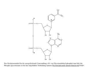 Das N-Atom im  Pyridin -Ring ist  vierbindig  und daher positiv geladen .