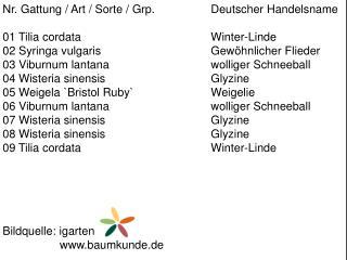 Nr. Gattung / Art / Sorte /  Grp .  Deutscher Handelsname 01  Tilia cordata Winter-Linde