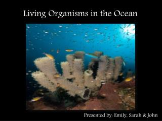 Living Organisms in the Ocean