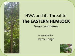 HWA and its Threat to  The EASTERN HEMLOCK Tsuga canadensis Presented by: Jayme Longo