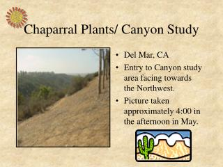 Chaparral Plants