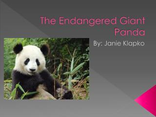 The Endangered Giant Panda