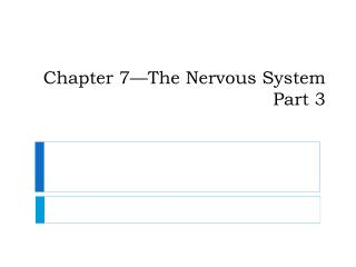 Chapter 7�The Nervous System Part 3