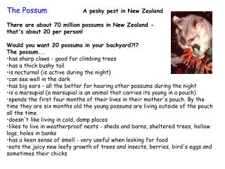 Is The Possum Native To NZ?