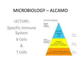 MICROBIOLOGY � ALCAMO