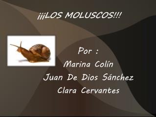 ���LOS MOLUSCOS!!!