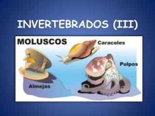 INVERTEBRADOS (III)