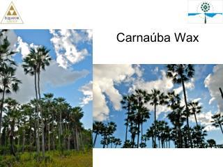 Carnaúba  Wax