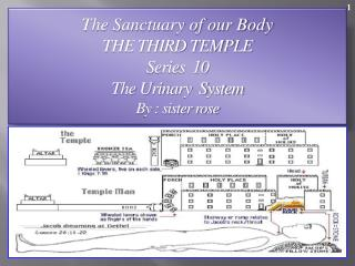 The Sanctuary of our Body THE THIRD TEMPLE Series  10   The Urinary  System  By : sister rose
