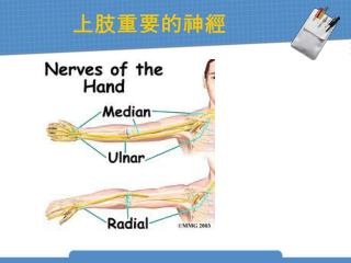 上肢重要的神經