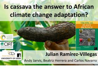 Is cassava the answer to African climate change adaptation?