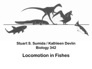 Stuart S.  Sumida /  Kathleen Devlin Biology 342 Locomotion in Fishes