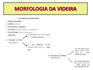 MORFOLOGIA DA VIDEIRA