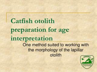 Catfish otolith preparation for age interpretation