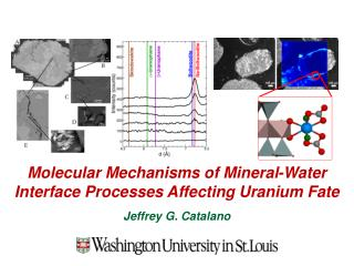 Molecular Mechanisms of Mineral-Water Interface Processes Affecting Uranium  Fate