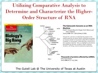 Utilizing Comparative Analysis to Determine and Characterize the Higher-Order Structure of RNA
