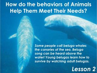 How do the behaviors of Animals Help Them Meet Their Needs?