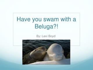 Have you swam with a Beluga?!