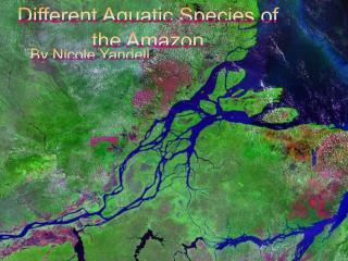 Different Aquatic Species of the Amazon
