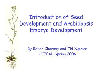 Introduction of Seed Development and Arabidopsis Embryo Development