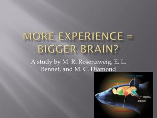 More Experience = Bigger Brain?