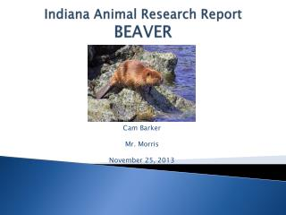 Indiana Animal Research Report BEAVER