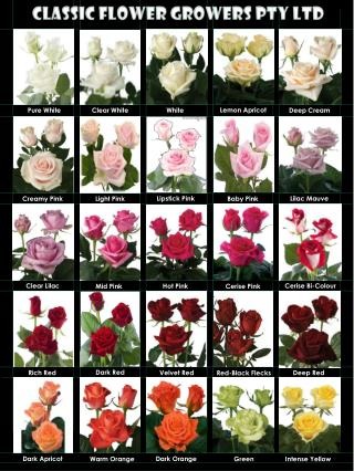 Classic Flower Growers PTY LTD