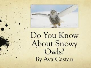Do You Know About  Snowy  Owls? By Ava  Castan