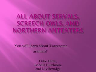 All about servals, screech owls, and northern anteaters