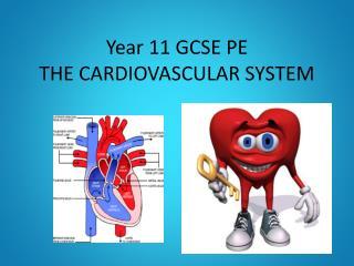 Year 11 GCSE PE THE CARDIOVASCULAR SYSTEM