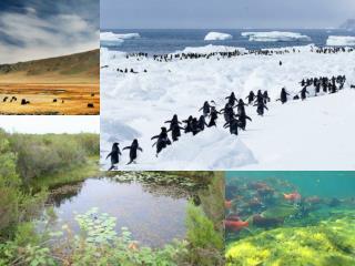 Les Ecosystèmes