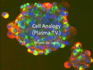 Cell Analogy (Plasma T.V.)
