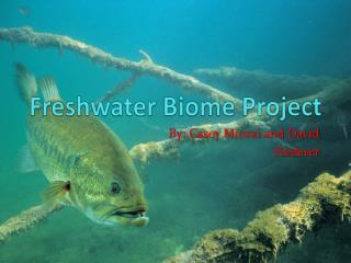 Freshwater Biome Project