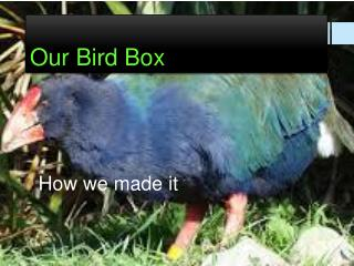 Our Bird Box