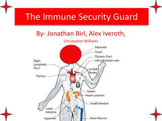 The  Immune Security Guard