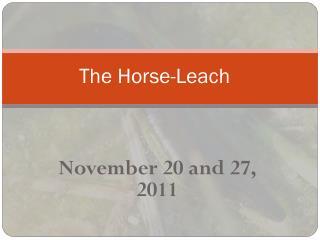 The Horse-Leach