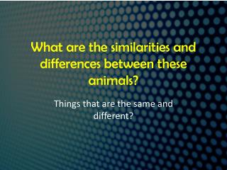 What are the similarities and differences between these animals?